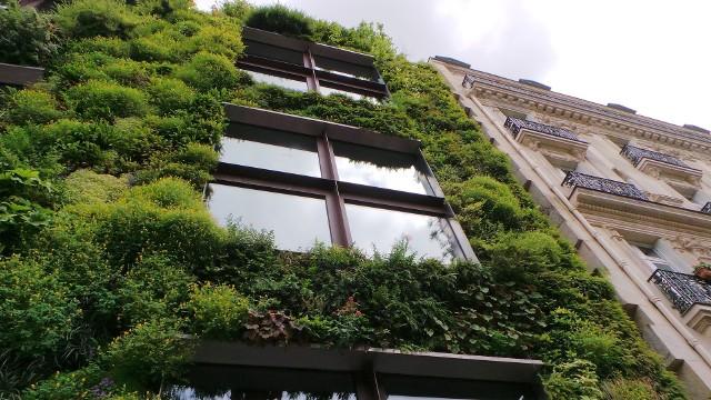 Zielona ścianaPrzykład pionowego ogrodu na frontowej elewacji budynku.