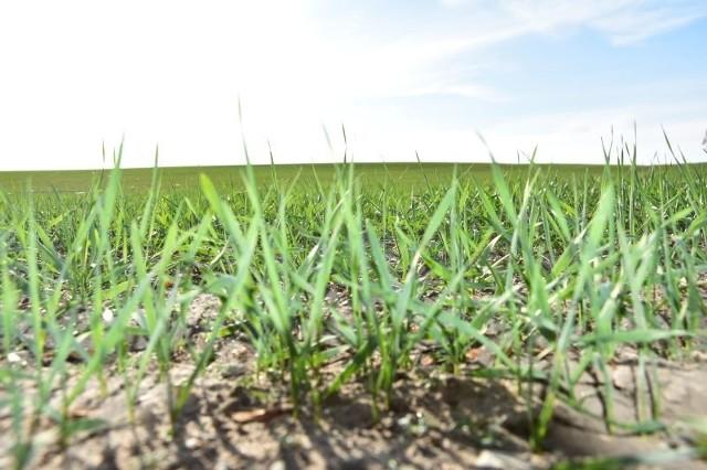 W Kujawsko-Pomorskiem wciąż jest głód ziemi