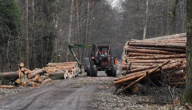 Masowa wycinka drzew w Puszczy Dulowskiej