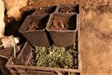 Augustów: 30-letni mężczyna posiadał w mieszkaniu sporą ilość narkotyków. Został zatrzymany przez policję (zdjęcia)