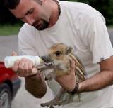 Duże pieniądze dla Ośrodka Rehabilitacji Dzikich Zwierząt w Łagiewnikach