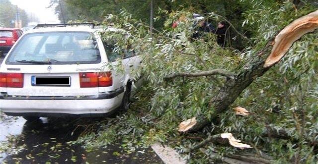 Przy Warszawskiej w Ostrołęce drzewo przygniotło jadący samochód. Na szczęście, nikomu nic się nie stało