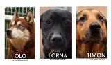 Kilkadziesiąt zwierzaków w gdyńskim Ciapkowie czeka na wspaniałą rodzinę!