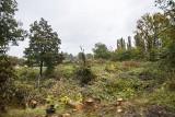Postępuje wycinka drzew pod budowę trasy S7 w Krakowie i na północnym odcinku Małopolski [ZDJĘCIA]