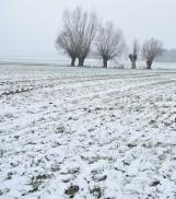 Śnieg zakrył uprawy. Oziminy hartują się pod śnieżną okrywą i są w dobrej formie