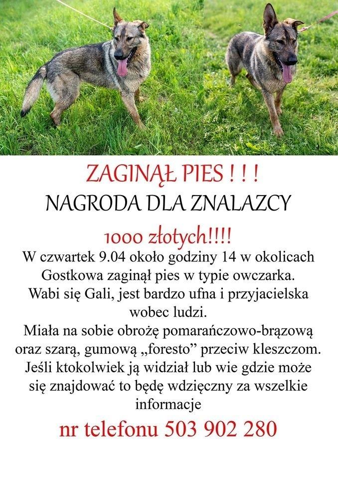 Pomóżmy odnaleźć psa.