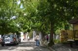 Patrol z piłą pilnie potrzebny! Gałęzie zagrażają ludziom i rysują samochody