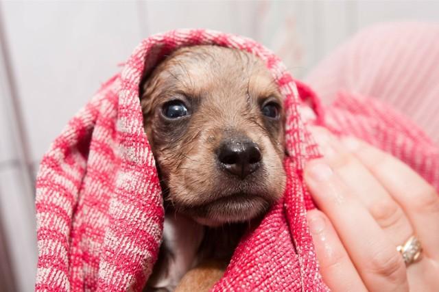 We wrocławskim schronisku na nowego właściciela czeka ok. 250 psów