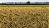 Państwowa ziemia w Polsce. Ile gruntów jest w Zasobie Własności Rolnej Skarbu Państwa?