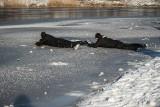 Ćwiczenia na lodzie w Koszalinie. Uważajcie, to śmiertelna pułapka [zdjęcia]