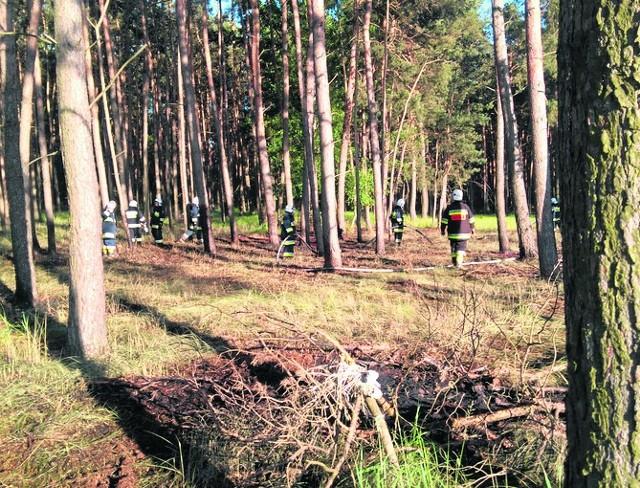 Kościan: Znowu podpalenie! Ktoś zagraża lasom