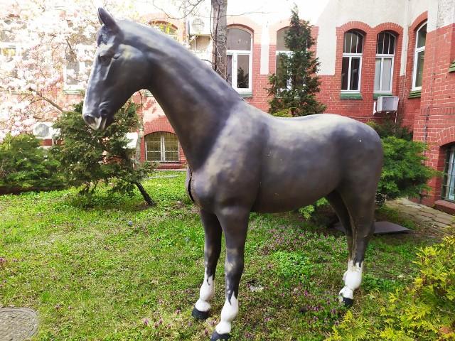 Zagadka tajemniczego konia przed Szpitalem Uniwersyteckim po latach została rozwiązana