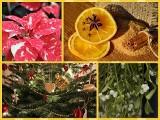 """Rośliny na Boże Narodzenie i ich """"magiczne"""" znaczenie"""