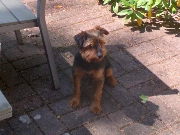 Pies czeka na właściciela.