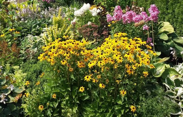 Od tego, co posadzimy we wrześniu, zależy to, jak nasz ogród będzie wyglądał w następnych sezonach. Oto rośliny, które warto posiać i posadzić.