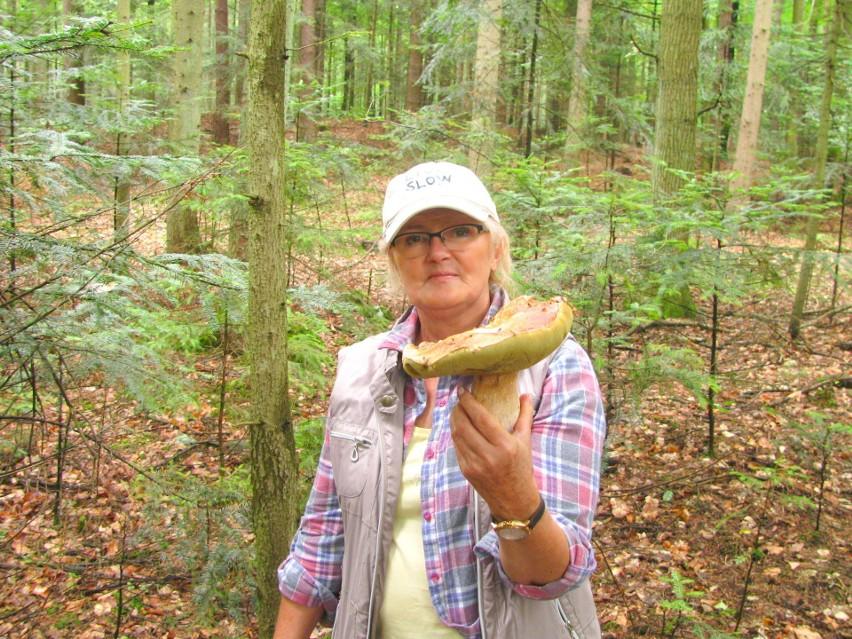 Barbara i Piotr Bergerowie, łodzianie, zebrali 30 kilogramów prawdziwków w mieszanym lesie 200 km od Łodzi