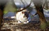 Szczury. My ich nienawidzimy, w  Chinach są symbolem płodności