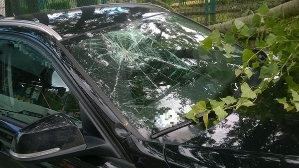 Złamana gałąź niszczyła samochód