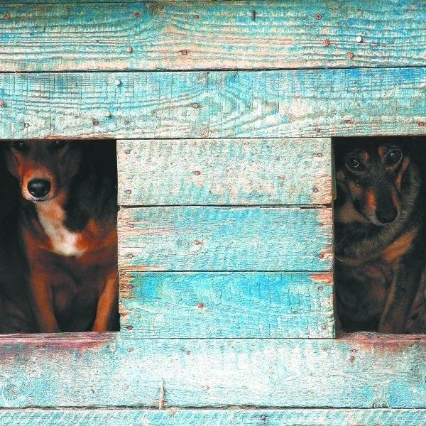 Niezbyt prężnie działające Towarzystwo Opieki nad Zwierzętami i Schronisko dla Bezdomnych Zwierząt to za mało.