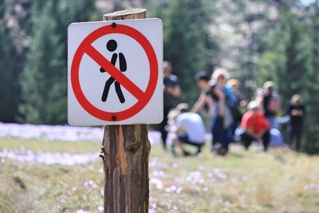 Nie schodź ze szlaku Podstawowa zasady w Tatrach jest taka, by trzymać się wytyczonych szlaków turystycznych. Tylko one są udostępnione dla turystów. Zbaczanie ze szlaku powoduje, że zadeptujemy przyrodę, płoszymy dzikie zwierzęta, dla których góry to dom.