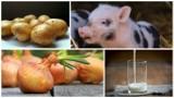 Rusza nowa pomoc dla producentów mleka, świń, owoców i warzyw