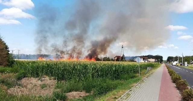 Do trzech pożarów pól doszło w czwartek na terenie powiatu nowotomyskiego.