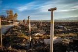 """50 000 tysięcy drzew dla Nadleśnictwa Lipusz. 19 i 26 października nastąpi wielki finał akcji """"Do nasadzenia"""""""