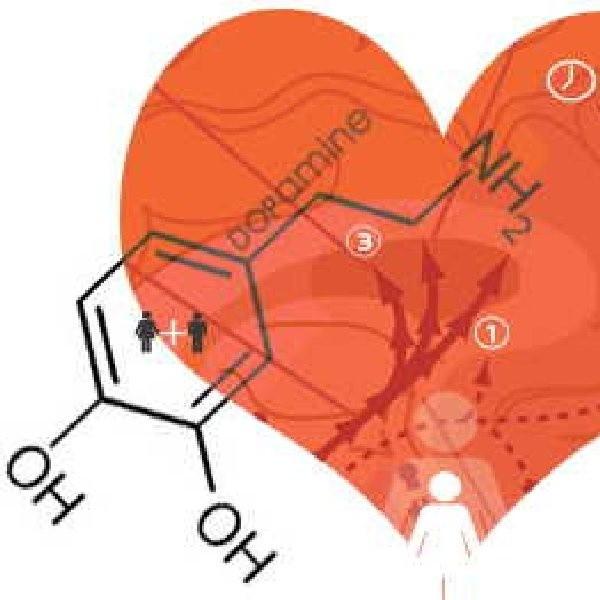 Za euforię która towarzyszy zakochaniu się odpowiedzialne są dopamina i norephetamina.