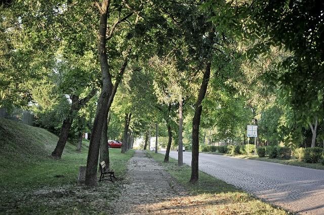 Drzewa przy ul. Wojska Polskiego w Świeciu. Niektóre mają w swoich koronach suche konary. czy to znacz, że ich żywot ma się ku końcowi?