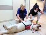 Labrador Denver pracuje w szpitalu w Jarocinie. Pomaga medykom zwalczać stres pocovidowy