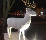 Sopot: Figura białego jelenia, która stanęła przy al. Niepodległości, została zniszczona. Ktoś pomalował ją sprayem. Policja bada sprawę