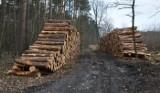 Zielona Góra. Wielka wycinka drzew przy ul. Sobkowiaka. Na ponad 5 hektarach rosły sosny, teraz będzie rósł las mieszany [ZDJĘCIA, WIDEO]