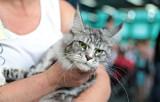 Dzisiaj rusza Międzynarodowa Wystawa Kotów. Sprawdź, gdzie