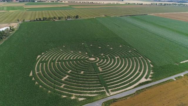 Gigantyczne labirynty kukurydziane pojawiły się w Polsce