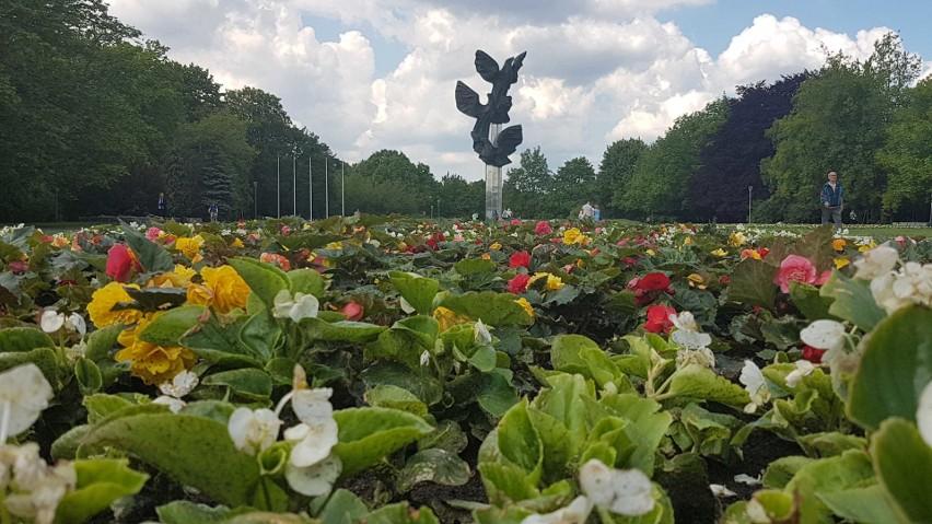 Tysiące kwiatów w Szczecinie. Jest pięknie i kolorowo! [ZDJĘCIA]
