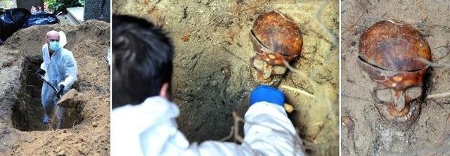 Widać wyraźnie trepanację czaszki. Jak mówi dr Krzysztof Szwagrzyk, naczelnik Oddziałowego Biura Edukacji Publicznej IPN we Wrocławiu, który przyjechał wspomagać prace przy ekshumacji, często bywało tak, że po zabiciu człowieka UB przekazywało zwłoki do ówczesnego Zakładu Anatomii Prawidłowej, by szkolili się na nich studenci.
