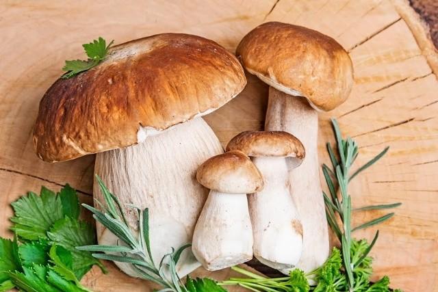 """Atlas grzybów otrzymasz już dziś w prezencie z """"Gazetą Lubuską"""". Nie przegap!"""