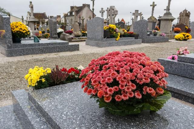 Na grób warto wybierać kwiaty, które są trwałe i wytrzymałe na niskie temperatury.