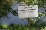 Wrocław: Skończyli deratyzację. Nie zabrali tablic ostrzegających