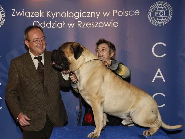 Wystawa Psów Rasowych w RzeszowieW Hali Podpromie w Rzeszowie odbyla sie III Miedzynarodowa Wystawa Psów Rasowych. Na wystawie mozna bylo podziwiac okolo 2000 psów ze 150 róznych ras.