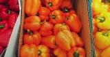 Tym się najesz i napijesz. 18 warzyw i owoców z największą zawartością wody. Dieta bez głodówki i smaczne orzeźwienie