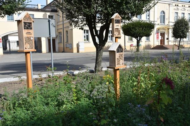 W centrum Szubina posadzono miododajne rośliny i kwiaty, zamontowano domki dla motyli i owadów