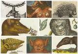 Stare obrazki ze zwierzętami robią furorę na FB. Teraz także na wystawie w Poznaniu! [ZDJĘCIA]