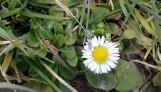 Widać już pierwsze oznaki wiosny w Oświęcimiu i powiecie oświęcimskim. Też zobaczyłeś i uwieczniłeś? Podziel się z nami zdjęciami