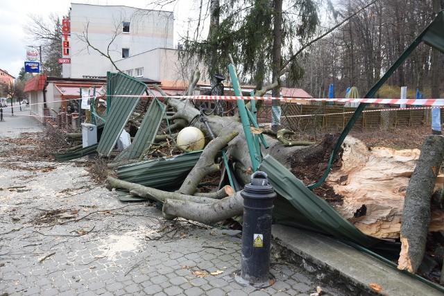 W Głuchołazach potężny buk przewrócił się na ogród restauracji Sudety, niszcząc przy okazji płot i uliczna lampę.