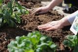 Glebogryzarki: spalinowe, elektryczne, ręczne. Które najlepiej wybrać do pracy w ogrodzie i ile kosztują? [ceny i zastosowanie] 25.04.21