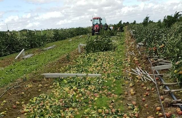 Poszkodowana została rodzina z województwa łódzkiego, trwa zbiórka na rzecz odbudowy ich sadu
