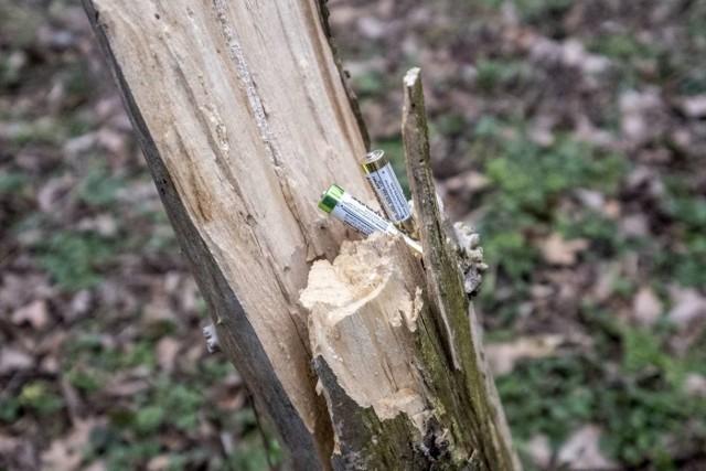 W ostatnich dniach członkowie Koalicji ZaZieleń zauważyli w sąsiedztwie elektrociepłowni Garbary na Ostrowie Tumskim masową wycinkę drzew. Pod topór poszło ponad 200 okazów. Co więcej, kolejne dwa tysiące drzew zostało zinwentaryzowanych przez firmę dendrologiczną i oznaczonych do wycinki.