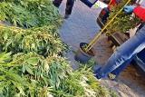 23 kg marihuany pod Łomżą. Cztery osoby z zarzutami za narkotyki warte ponad milion złotych (zdjęcia)