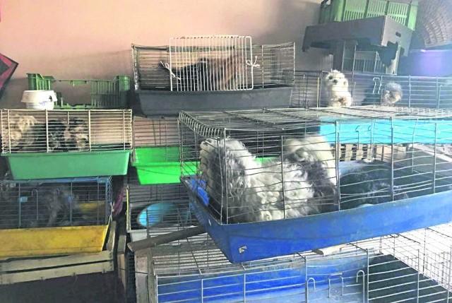 Szczenne zwierzęta trzymane były w króliczych klatkach